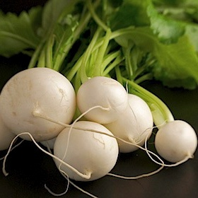 Don't I look yummy? Turnip roots are high in vitamin C, potassium, and calcium. The greens are high in vitamins A, C, and B vitamins, plus potassium, magnesium, and calcium.